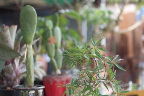 近江八幡で観葉植物のことならライブス