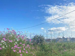 近江八幡で新築注文住宅なら住宅工房ライブス